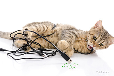 why-does-my-catt-chew-electrical-cords-465300336